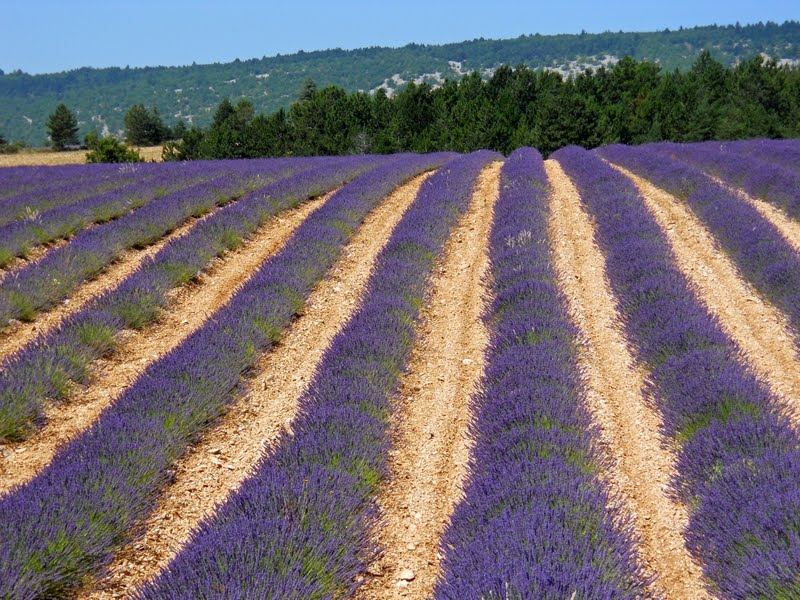Discovering the Luberon